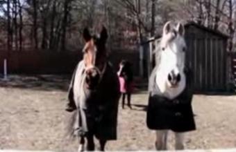 1. Juokingas video rinkinys apie arklius