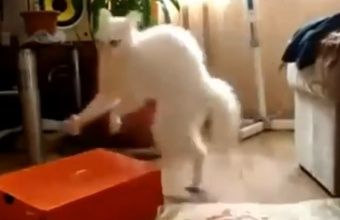 1. Linksmai apie katinus ir kates