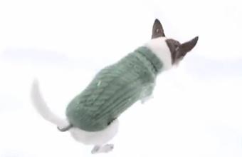 4. Šuo ir sniegas