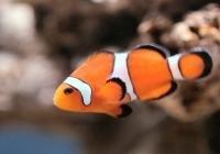 Žuvis iš www.dykai.lt