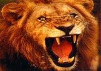 lion_200x140.jpg